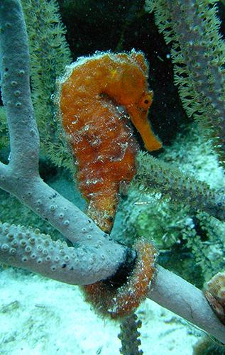 Paros Scuba Diving Trips, Greece